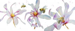 Bees and magnolias