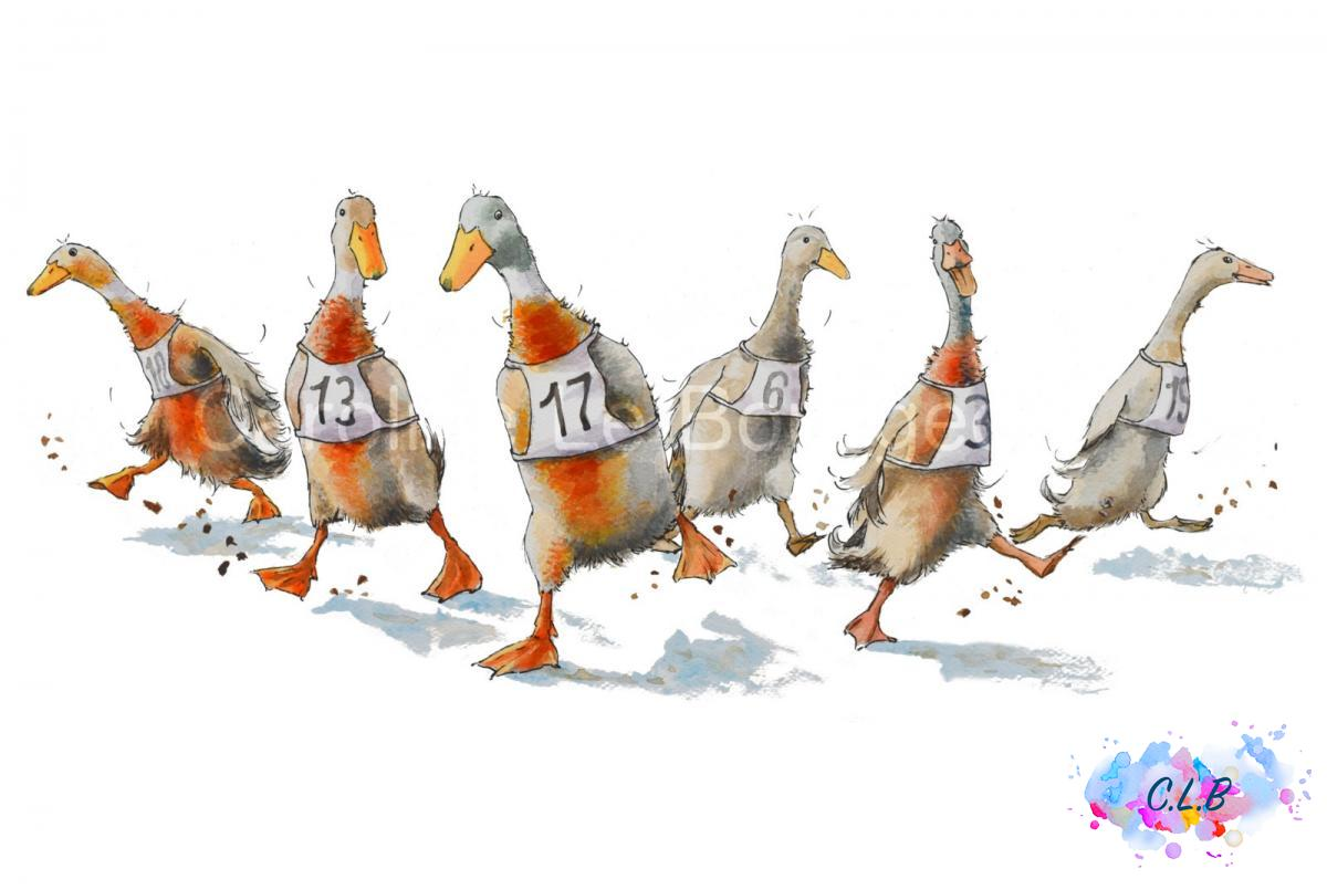 Indian-Runner-ducks-race-a3-