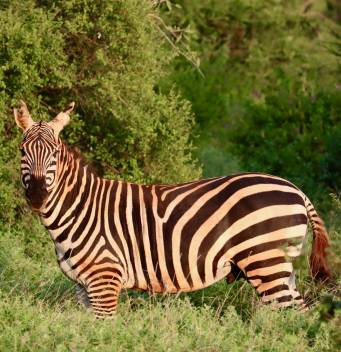 african-animals-kenya-31