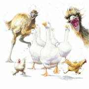 Rush-hour-with-the-emus
