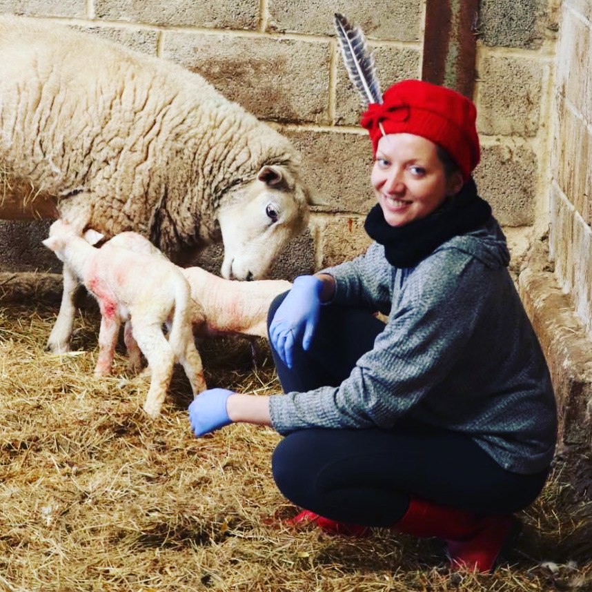 Delivering lambs, welcome to the world!
