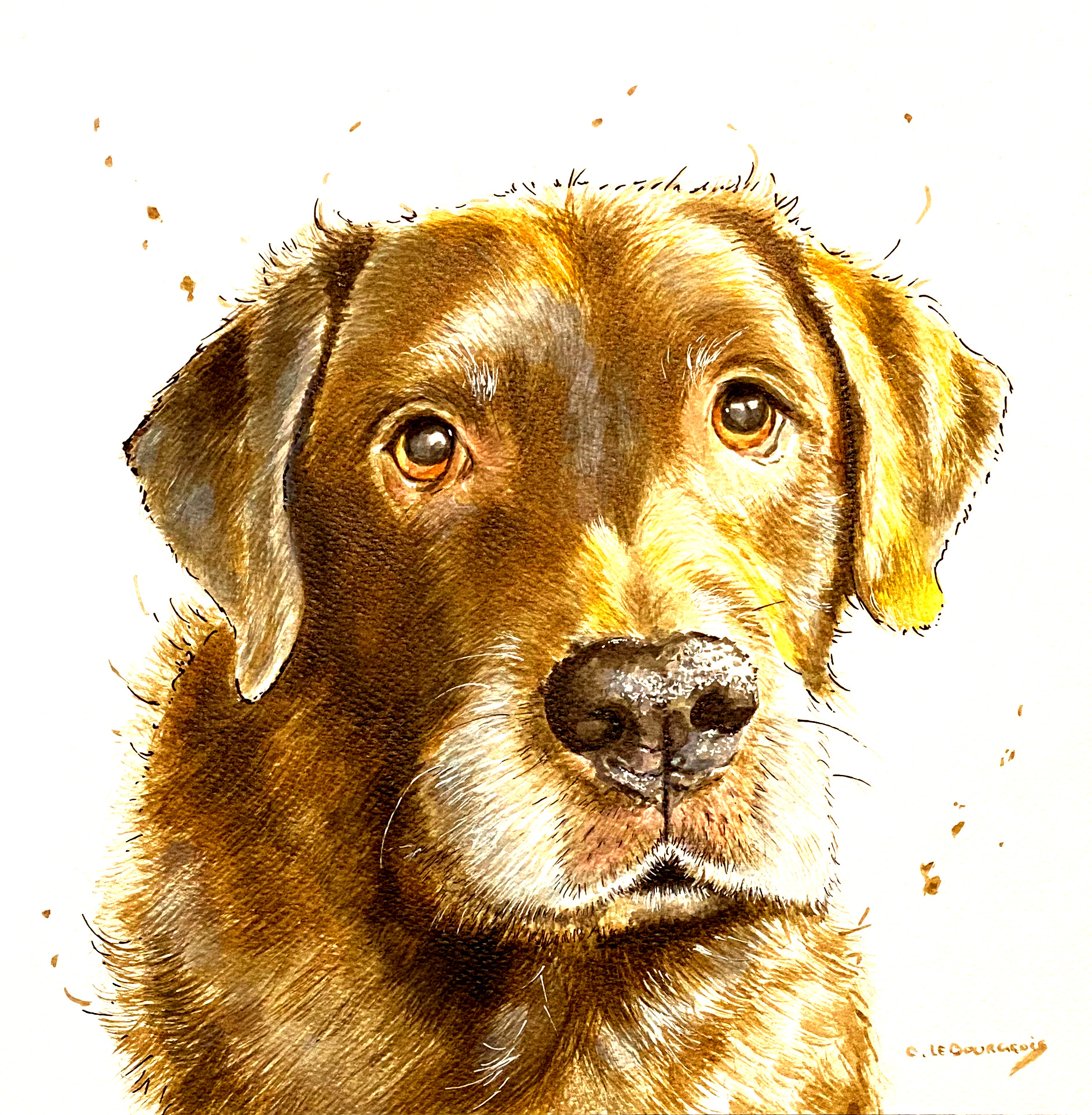 Pet portrait of Moose the chocolate Labrador.