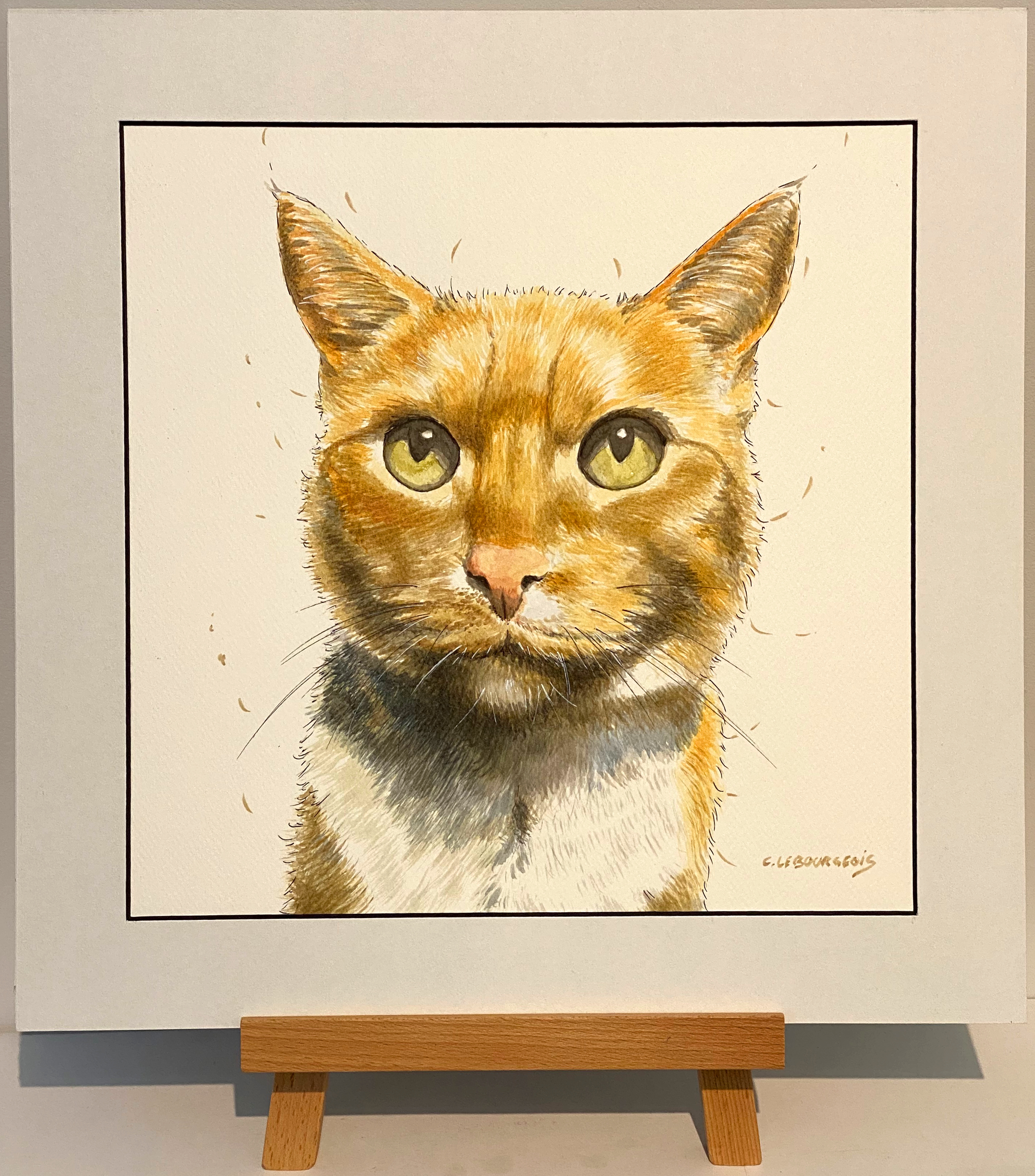 Chippy the cat - pet portrait